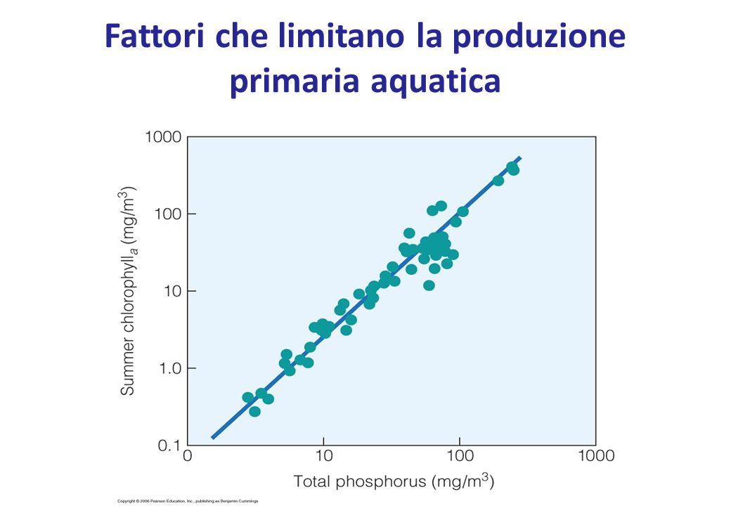 Fattori che limitano la produzione primaria aquatica
