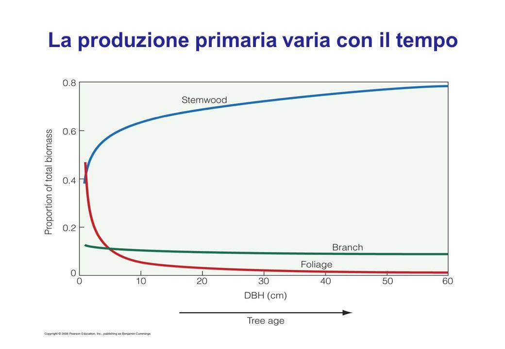 La produzione primaria varia con il tempo