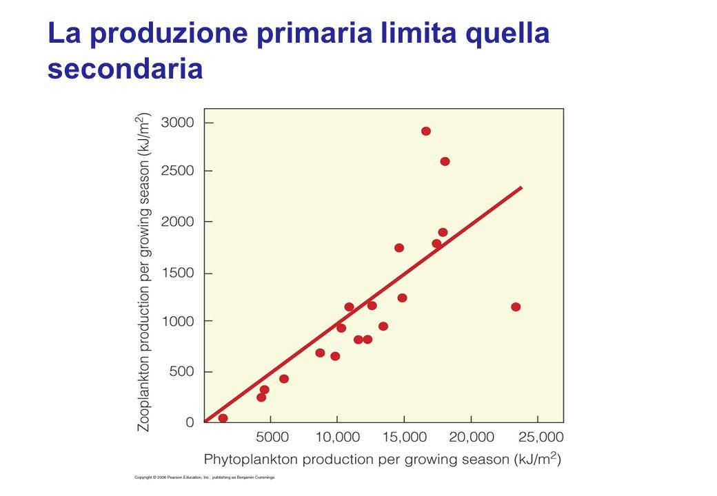 La produzione primaria limita quella secondaria