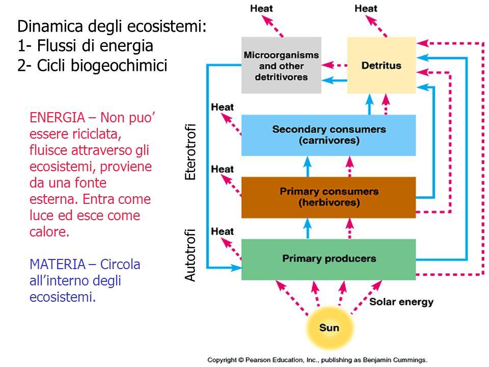 Dinamica degli ecosistemi: 1- Flussi di energia 2- Cicli biogeochimici