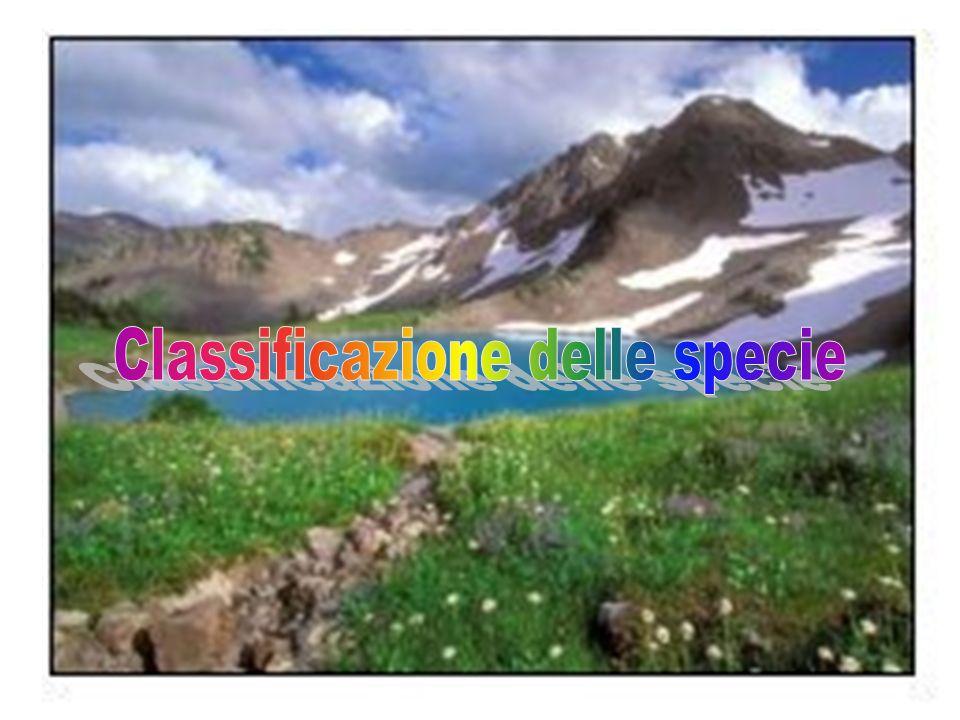 Classificazione delle specie