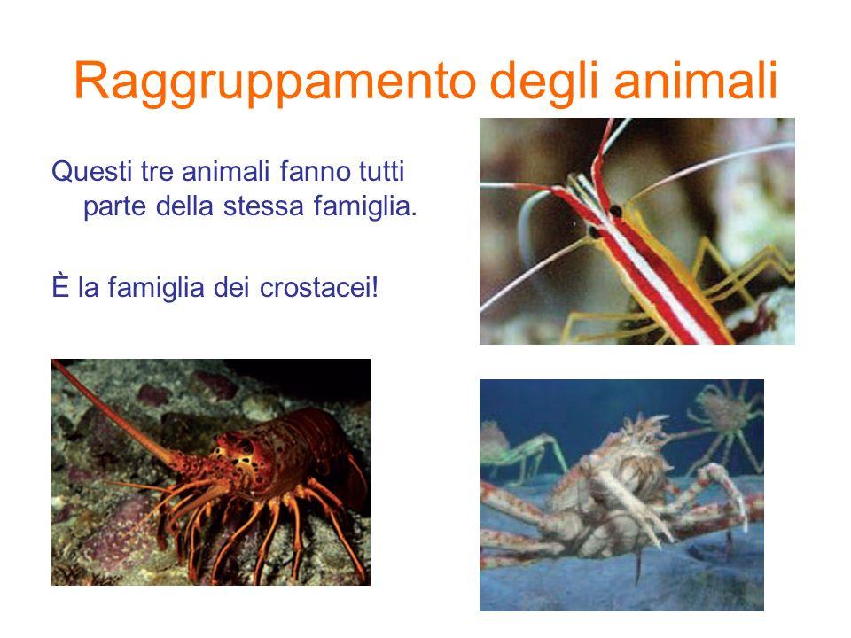 Raggruppamento degli animali