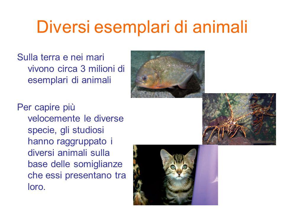 Diversi esemplari di animali