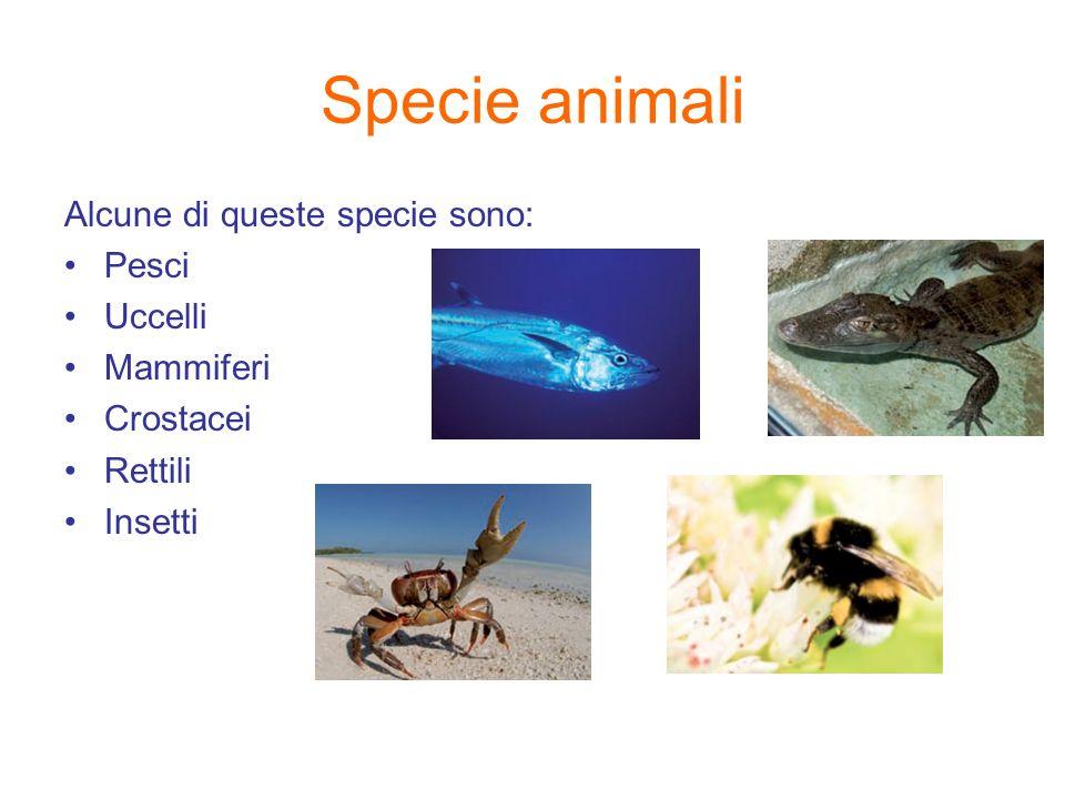 Specie animali Alcune di queste specie sono: Pesci Uccelli Mammiferi