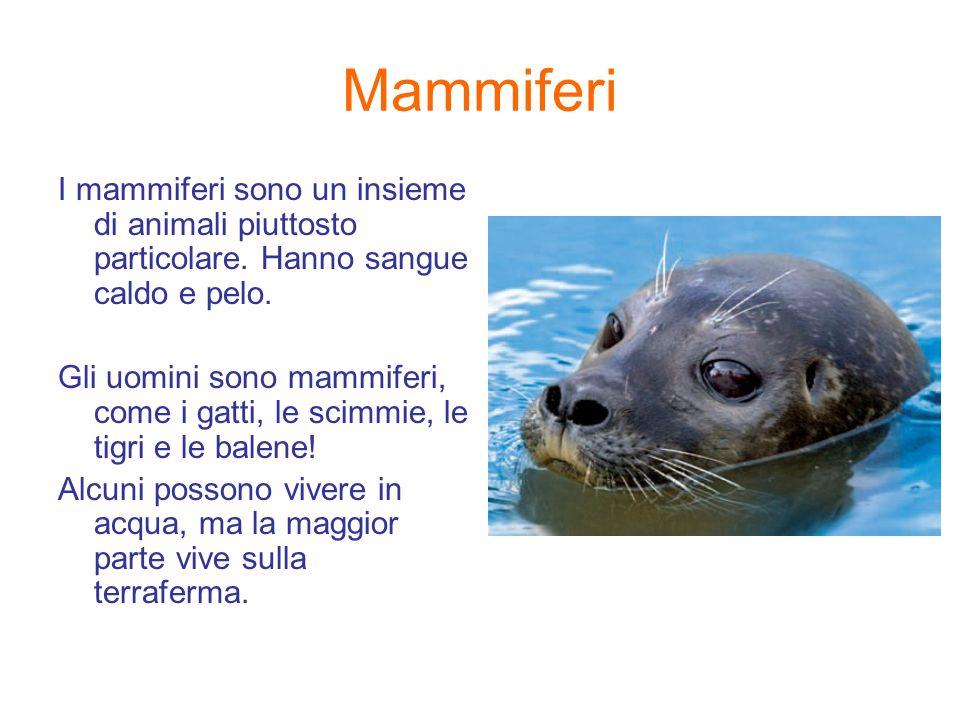 Mammiferi I mammiferi sono un insieme di animali piuttosto particolare. Hanno sangue caldo e pelo.