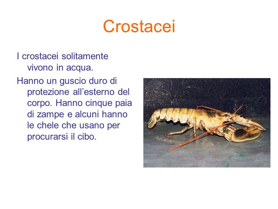 Crostacei I crostacei solitamente vivono in acqua.
