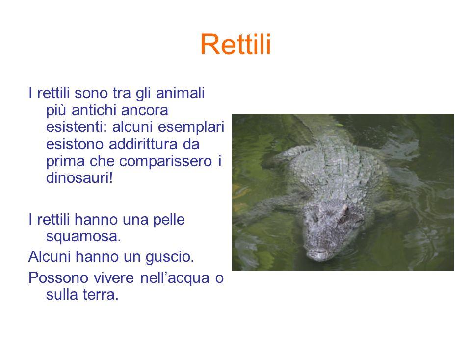 Rettili I rettili sono tra gli animali più antichi ancora esistenti: alcuni esemplari esistono addirittura da prima che comparissero i dinosauri!