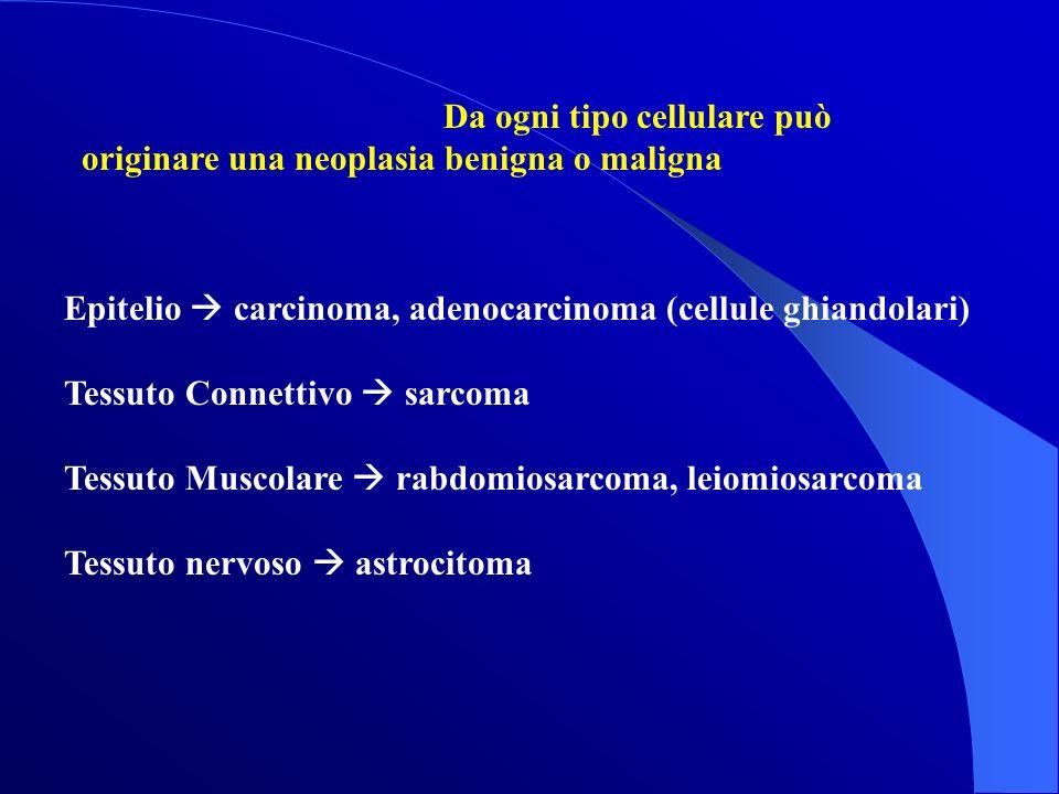Da ogni tipo cellulare può originare una neoplasia benigna o maligna