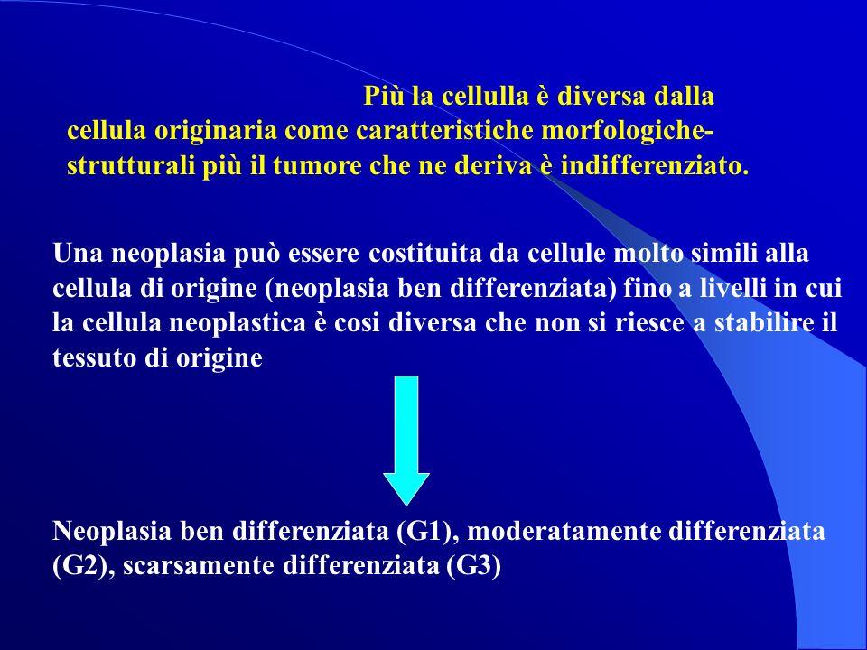 Più la cellulla è diversa dalla cellula originaria come caratteristiche morfologiche-strutturali più il tumore che ne deriva è indifferenziato.