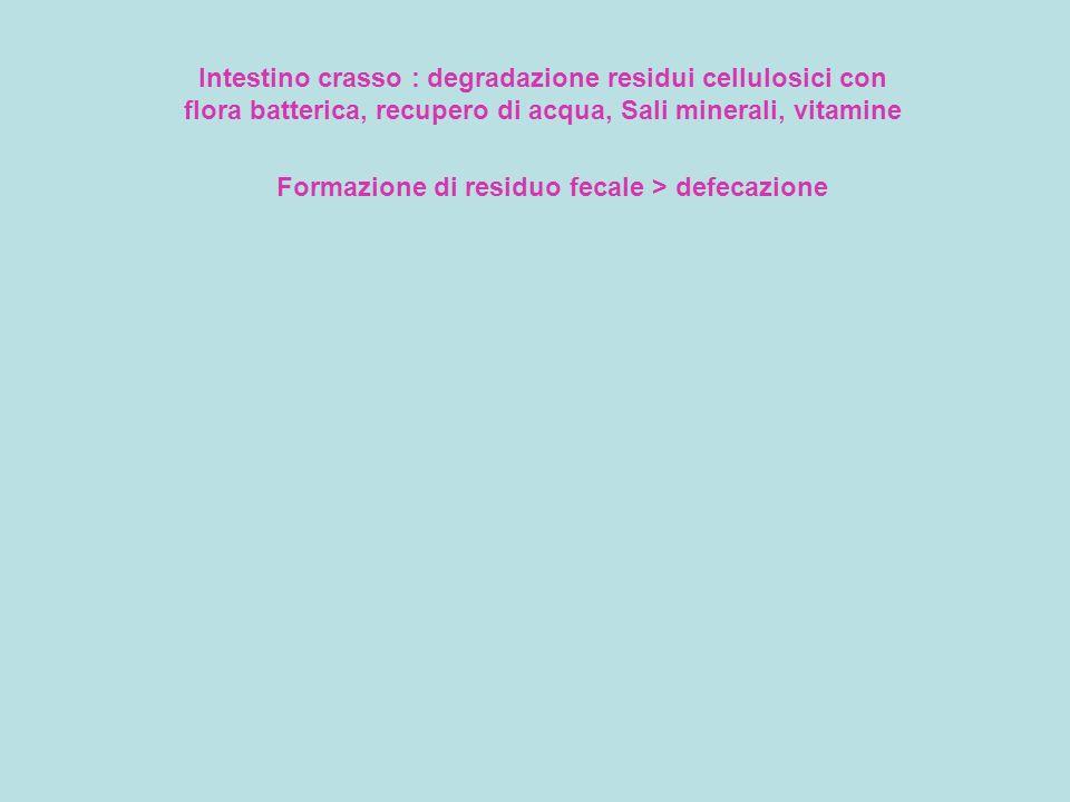 Formazione di residuo fecale > defecazione