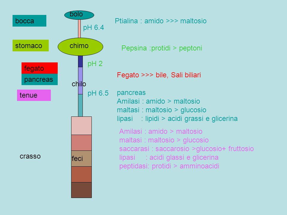 Ptialina : amido >>> maltosio