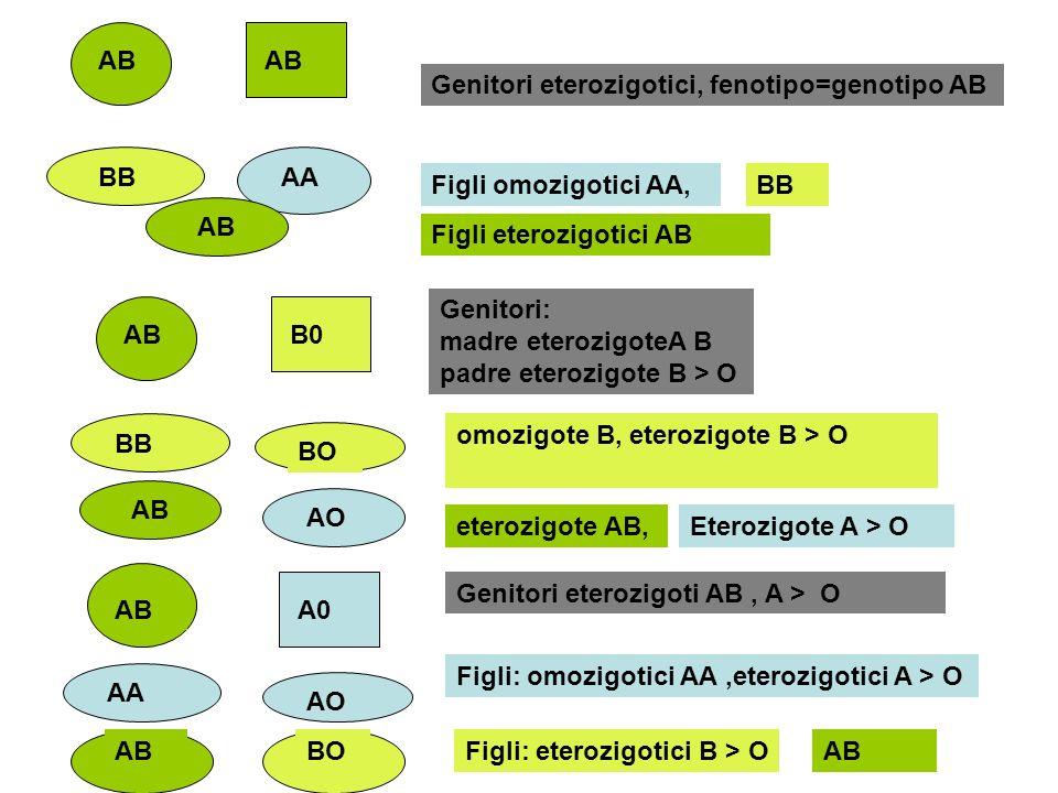 ABBB. Genitori eterozigotici, fenotipo=genotipo AB. Figli omozigotici AA, AA. Figli eterozigotici AB.