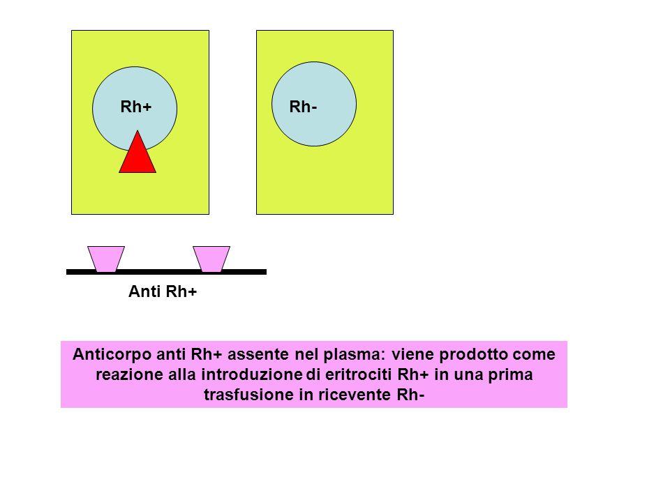 Rh- Rh+ Anti Rh+