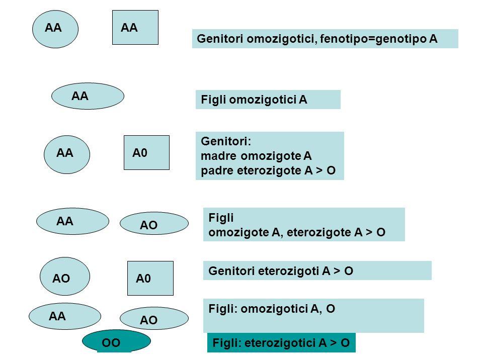 AAAA. Genitori omozigotici, fenotipo=genotipo A. AA. Figli omozigotici A. Genitori: madre omozigote A padre eterozigote A > O.
