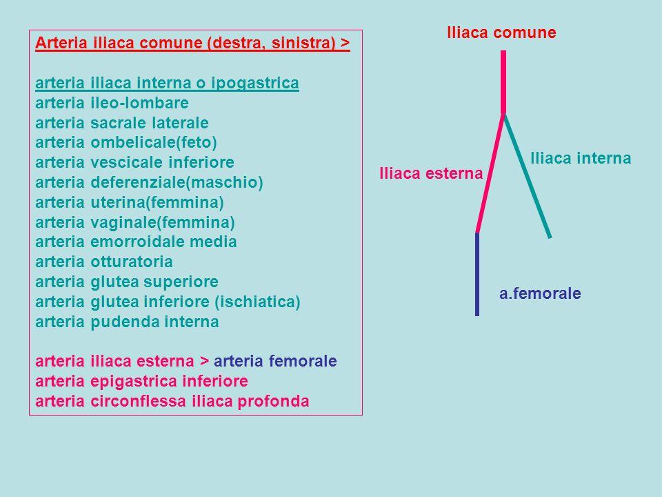 Iliaca comune