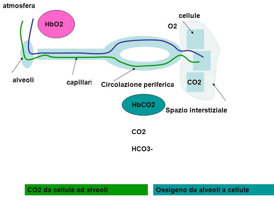 atmosferaHbO2. cellule. O2. alveoli. capillari. CO2. Circolazione periferica. HbCO2. CO2. HCO3- Spazio interstiziale.