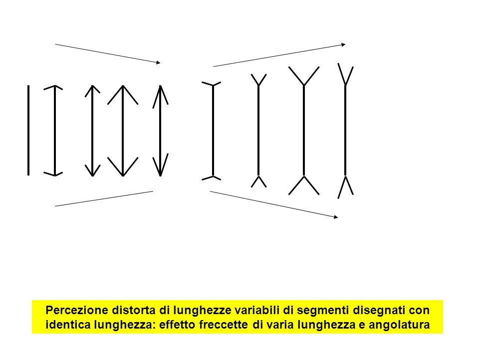 Percezione distorta di lunghezze variabili di segmenti disegnati con identica lunghezza: effetto freccette di varia lunghezza e angolatura