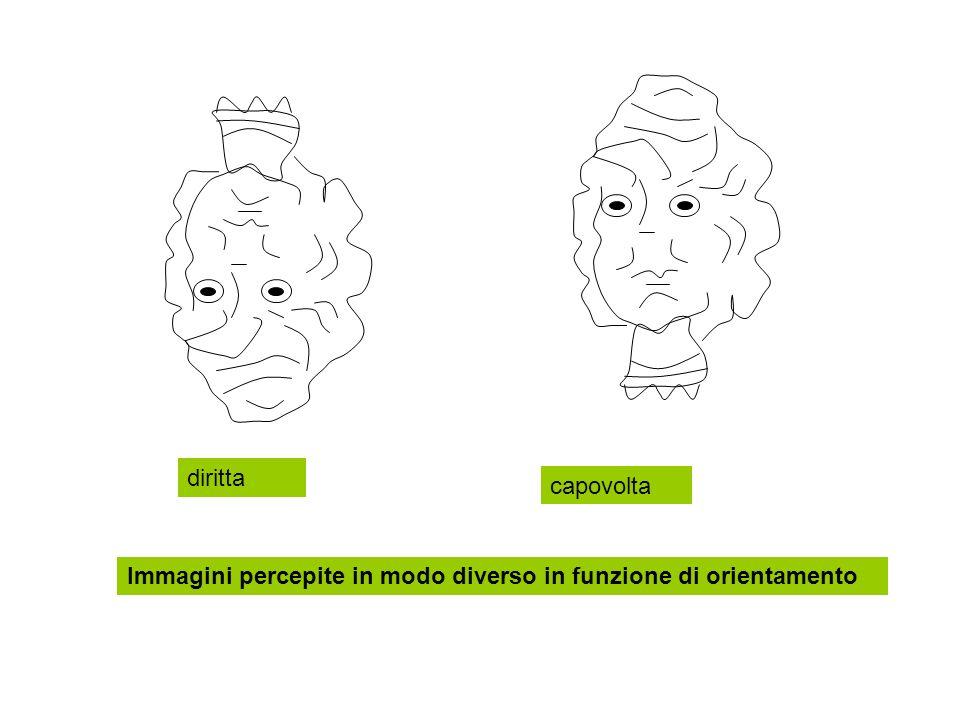 diritta capovolta Immagini percepite in modo diverso in funzione di orientamento