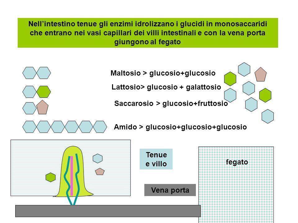 Maltosio > glucosio+glucosio