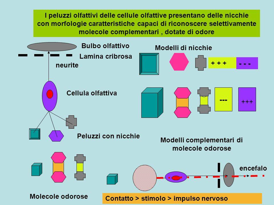 Modelli complementari di molecole odorose