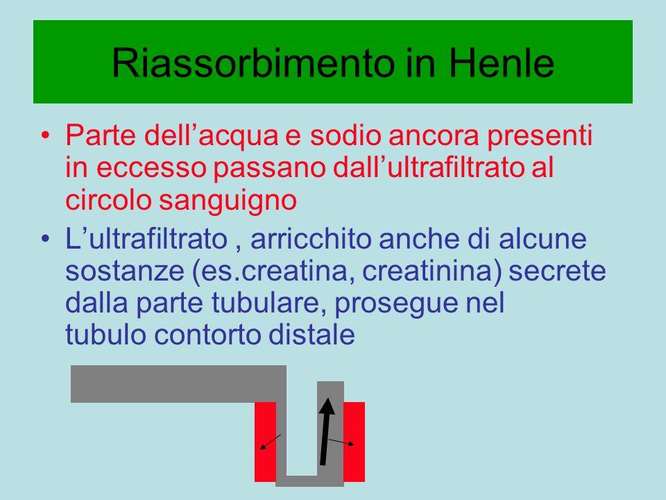 Riassorbimento in Henle