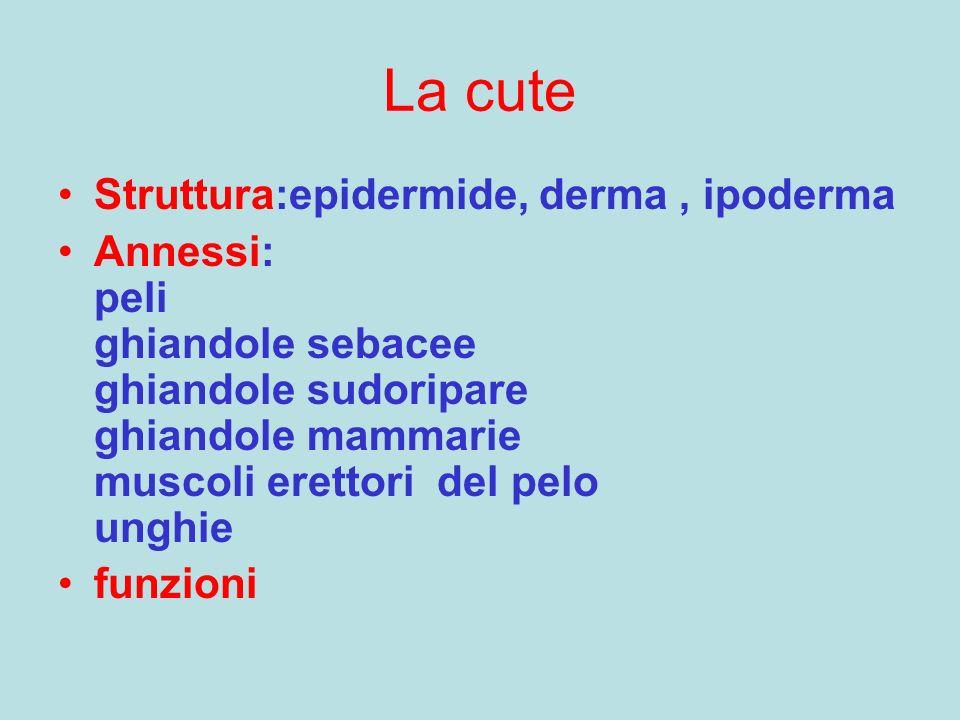 La cute Struttura:epidermide, derma , ipoderma