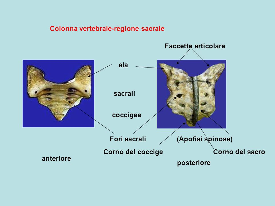 Colonna vertebrale-regione sacrale
