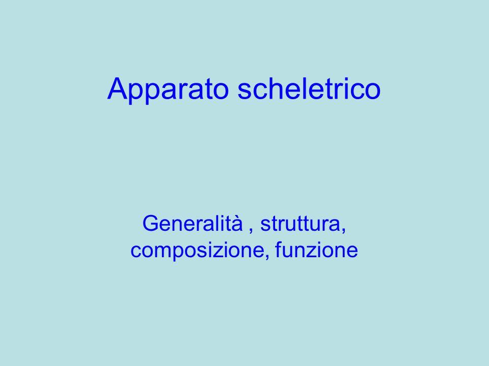 Generalità , struttura, composizione, funzione