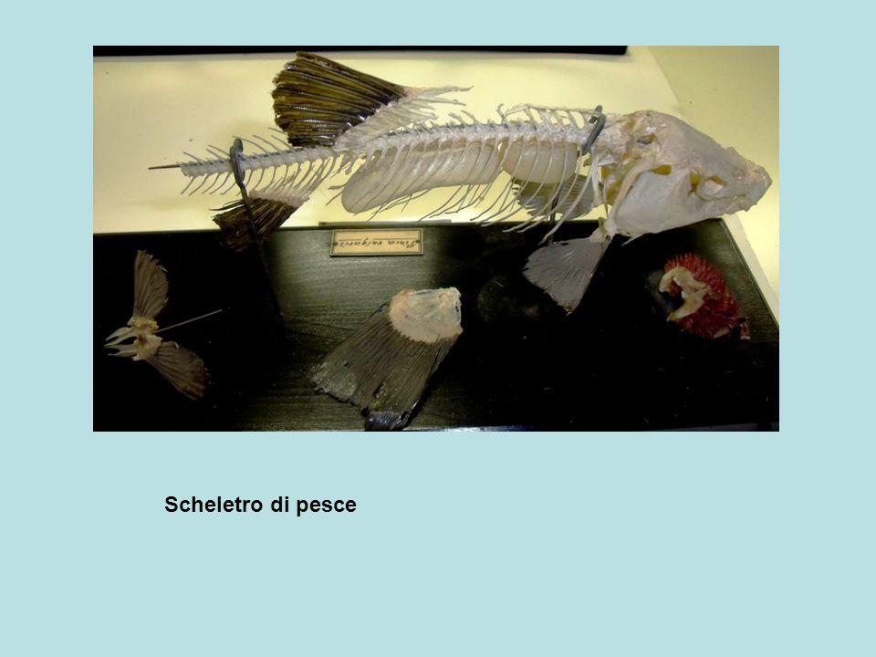 Scheletro di pesce