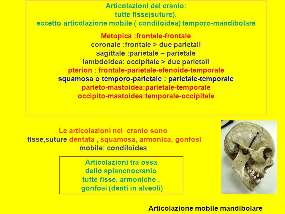 Articolazione mobile mandibolare