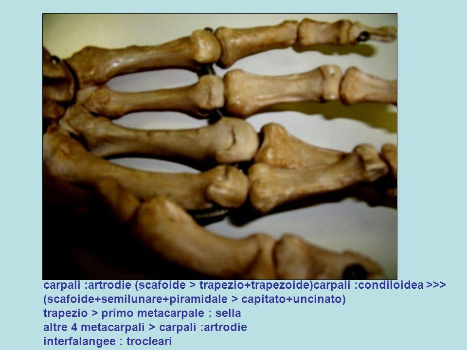 carpali :artrodie (scafoide > trapezio+trapezoide)carpali :condiloidea >>> (scafoide+semilunare+piramidale > capitato+uncinato) trapezio > primo metacarpale : sella altre 4 metacarpali > carpali :artrodie interfalangee : trocleari