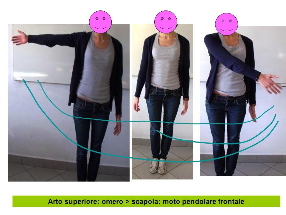 Arto superiore: omero > scapola: moto pendolare frontale