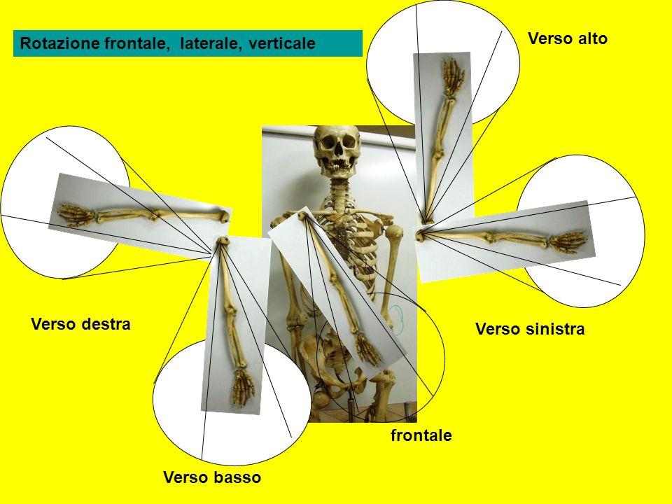 Verso alto Rotazione frontale, laterale, verticale.