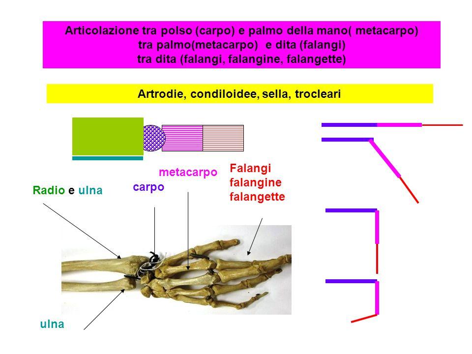 Artrodie, condiloidee, sella, trocleari