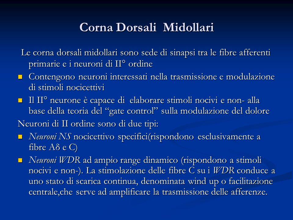 Corna Dorsali Midollari