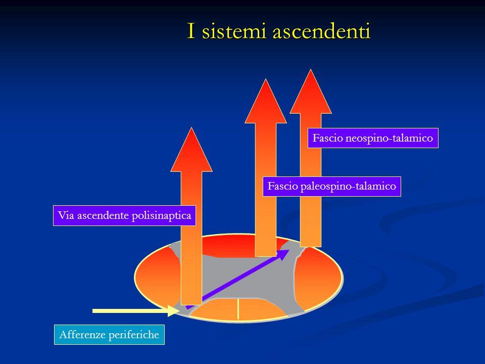 I sistemi ascendenti Fascio neospino-talamico