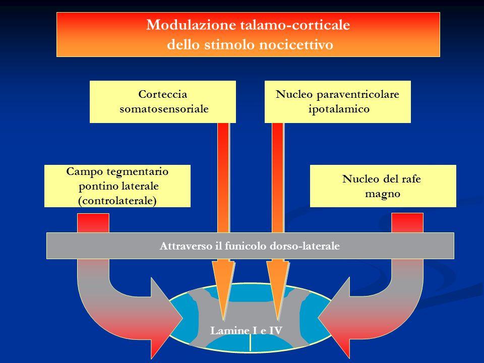 Modulazione talamo-corticale dello stimolo nocicettivo