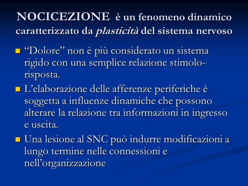 NOCICEZIONE è un fenomeno dinamico caratterizzato da plasticità del sistema nervoso