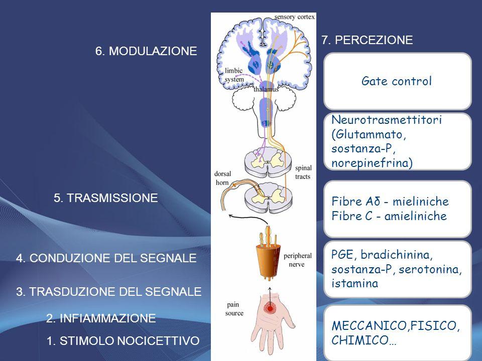 7. PERCEZIONE 6. MODULAZIONE. Gate control. Neurotrasmettitori (Glutammato, sostanza-P, norepinefrina)