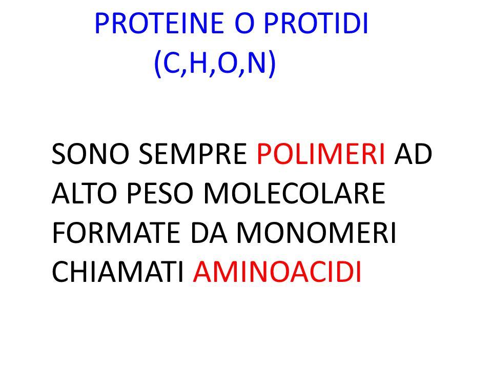 PROTEINE O PROTIDI (C,H,O,N) SONO SEMPRE POLIMERI AD ALTO PESO MOLECOLARE FORMATE DA MONOMERI CHIAMATI AMINOACIDI.