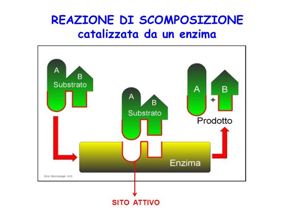 REAZIONE DI SCOMPOSIZIONE catalizzata da un enzima