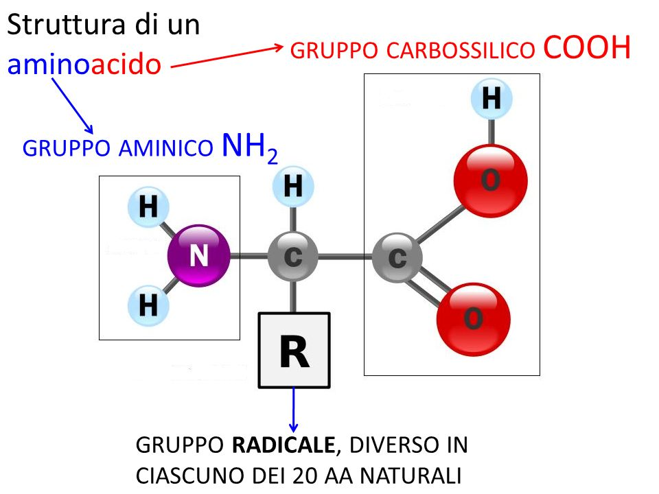 Struttura di un aminoacido