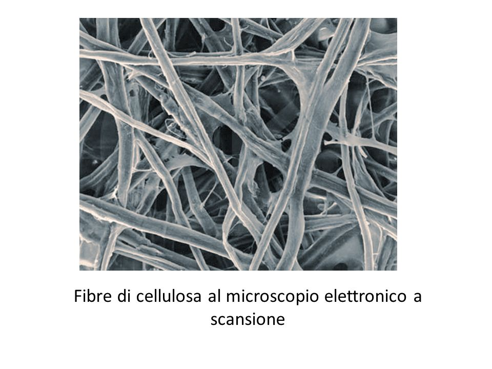 Fibre di cellulosa al microscopio elettronico a scansione