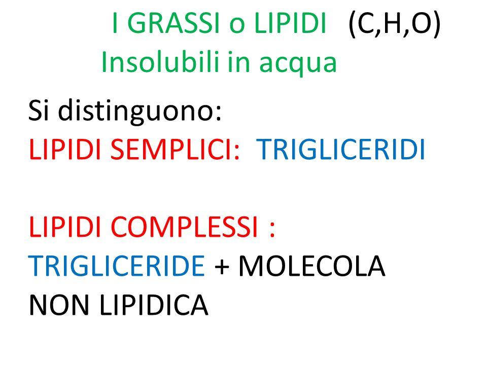 I GRASSI o LIPIDI Insolubili in acqua. (C,H,O) Si distinguono: LIPIDI SEMPLICI: TRIGLICERIDI.