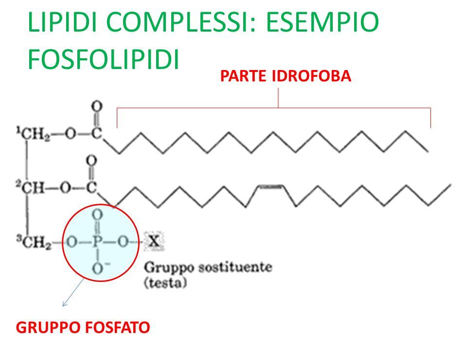 LIPIDI COMPLESSI: ESEMPIO FOSFOLIPIDI