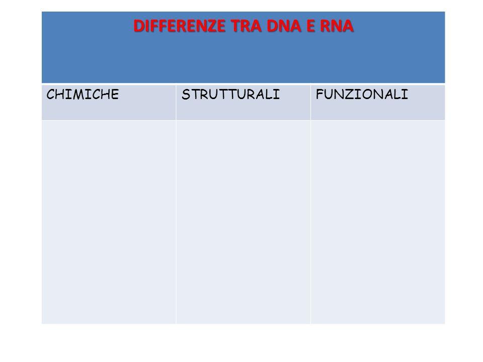 DIFFERENZE TRA DNA E RNA