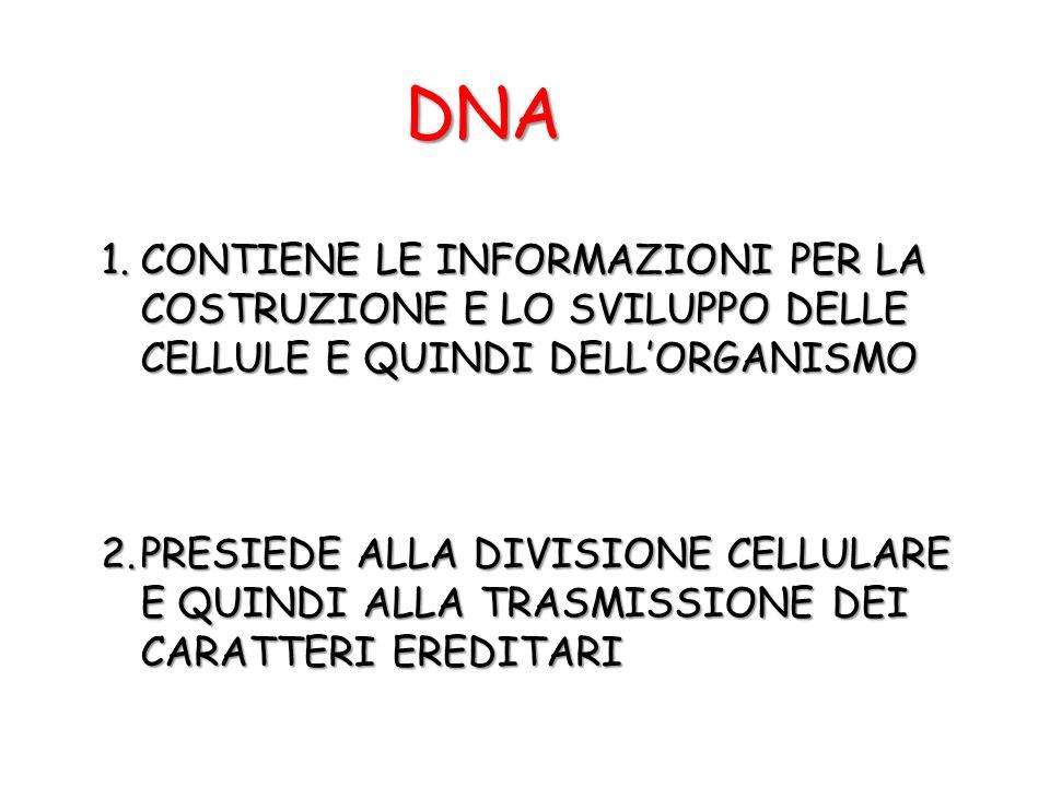 DNA CONTIENE LE INFORMAZIONI PER LA COSTRUZIONE E LO SVILUPPO DELLE CELLULE E QUINDI DELL'ORGANISMO.