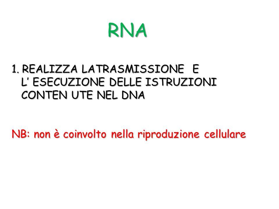 RNA REALIZZA LATRASMISSIONE E L' ESECUZIONE DELLE ISTRUZIONI