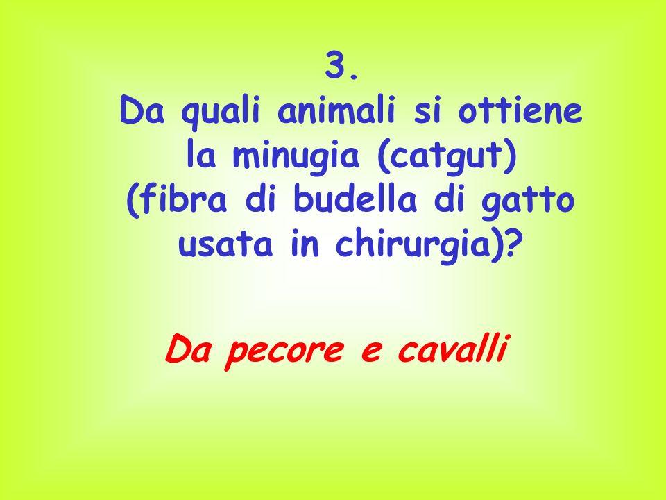 Da quali animali si ottiene la minugia (catgut)
