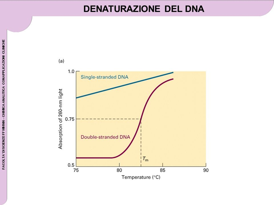 DENATURAZIONE DEL DNA